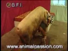 BFI - Man fucked by boar
