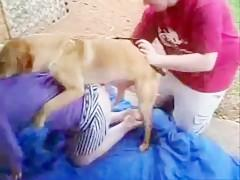 Bestiality - Animal Sex - Dog Very Like To Fuck A Girl Outoor