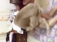 Dog fucking hard to girl - Video of extreme bestiality
